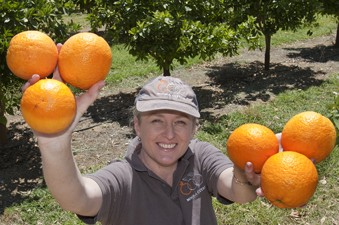 How a grain-grower successfully expanded into citrus